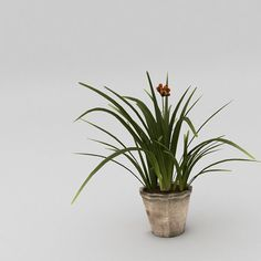 small plant with pot  3d model obj fbx ma mb mtl tga 1