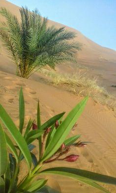 The breattaking view of the Sahara Desert.