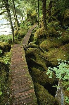 The trail to Punchbowl Cove, Misty Fiords National Monument.ALASKA There are trails like this all over Juneau & Tongass National Forest. So peaceful. Foto Nature, All Nature, Nature Music, Oh The Places You'll Go, Places To Travel, Places To Visit, Camping Places, Travel Destinations, Tongass National Forest