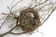 branches and a little nest...simple