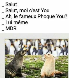 Funny Captions, Funny Jokes, Wallpaper Aesthetic, Ok Boomer, How To Speak French, Happy Fun, Funny Pins, Laughing So Hard, Funny Moments