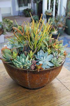 cactus arrangement, leaf and clay