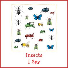 Insects I Spy {free printables} - Gift of Curiosity