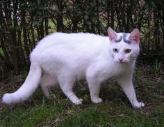 Har du fremmede katte i have? Gør haven kattefri med disse tips