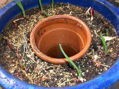 Inside-out Self-watering Pot « Strawberry Fields for Breakfast