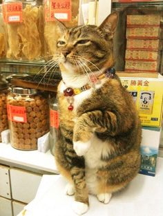 まねきねこ (Maneki neko: Lucky cat) Welcome! at a tiny shop
