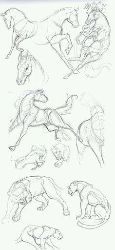 Horse and lion drawings.