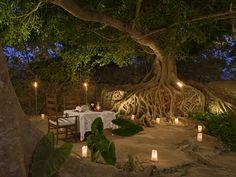 cena romantica bosque - Buscar con Google