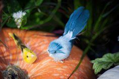 Halloween is terminated, came blue bird by Ior Kamitani - Photo 180599077 / 500px