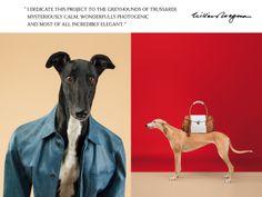 Greyhound man