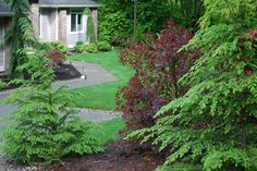 What are the right plants and trees for your yard specifically? Save money and time by choosing the right plant for the right place. For more information on how to pick the right vegetation for your yard visit naturalyardcare.info