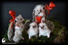 Valentine's Day Gifts Zlata's fantasy dolls - Baby hedgehog N11, 13, 14, 15