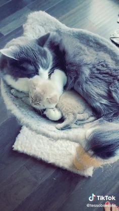 Funny Cute Cats, Cute Baby Cats, Cute Kitten Gif, Cute Little Animals, Cute Cats And Kittens, Cute Funny Animals, Kittens Cutest, Cute Dogs, Gato Gif