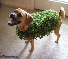 Chia Pet Slinky - Halloween Costume Contest via @costumeworks