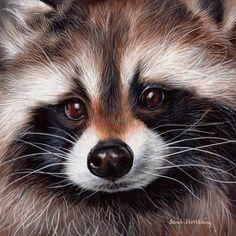 Wildlife paintings, wildlife drawings and pet portraits. Wildlife Paintings, Wildlife Art, Animal Paintings, Animal Drawings, Oil Paintings, Horse Drawings, Raccoon Art, Cute Raccoon, Vida Animal