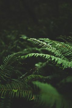 Shadows and ferns -- Deep Love Photography Nature Verte, The Ancient Magus Bride, Love Photography, Adventure Photography, Ferns, Shades Of Green, The Great Outdoors, Wallpaper Backgrounds, Wallpapers