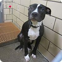 Adopt A Pet :: Leo - Sidney, OH
