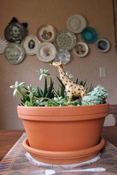 love this sassy giraffe!  {5 Ways to Use Succulent Plants at Home}