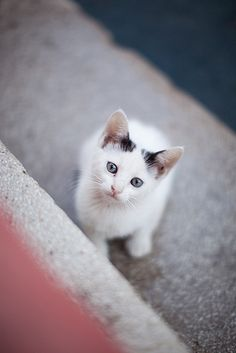 looks just like Kit, the cat I had when I was little...