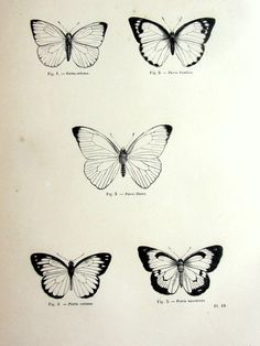 Wonderful antique butterfly print, original 1860 lepidoptera french engraving, i… Wonderful antique butterfly print, original 1860 lepidoptera french engraving, insect plate illustra Vintage Butterfly Tattoo, Small Butterfly Tattoo, Butterfly Drawing, Butterfly Tattoo Designs, Butterfly Print, Butterfly Illustration, French Illustration, Butterfly Design, Trendy Tattoos