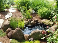 Pin Beautiful-small-pond-and-water-plants-for-garden-ideas