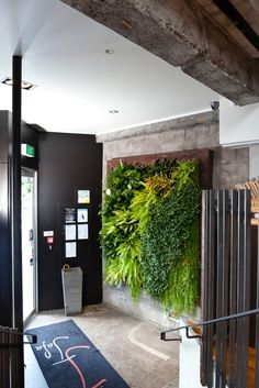 Green wall created for Jafa, Auckland.