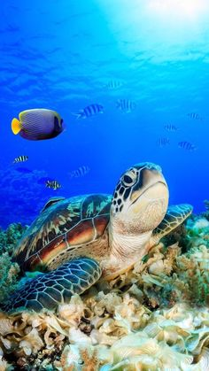 Painting ocean life animals ideas baby ocean animals who are here to brighten your day ocean conservancy Baby Sea Turtles, Cute Turtles, Beautiful Sea Creatures, Animals Beautiful, Sea Turtle Pictures, Baby Animals, Cute Animals, Underwater Animals, Turtle Love