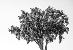 Tree of life by michaelbrausen