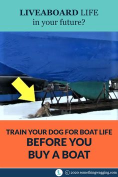 Is your dog ready to live on a boat? Start training now to get them ready for cruising. Sailboat Living, Living On A Boat, Dogs On Boats, Long Car Trips, Life Before You, Buy A Boat, Dog Anxiety, Kinds Of Dogs, Pet Travel