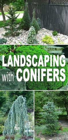 Great tips and ideas on landscaping with evergreens and more specifically - Conifers! • Landscaping With Conifers! #landscaping #DIYlandscaping #gardening #DIYgardening #lanscapingwithconifers