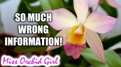 Warning: Don't follow Orchid instruction labels!