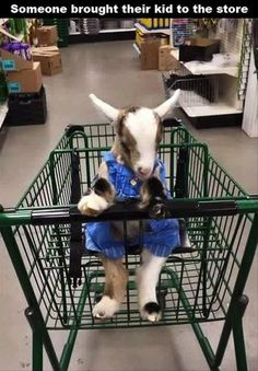 Normally I find kids running around stores annoying but I wouldn't mind running around with this one.