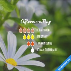 The ultimate essential oil blend software! Create your aromatherapy blends or search through our extensive list. Easily find what blends you can make based on the oils you have. Essential Oils For Sleep, Frankincense Essential Oil, Essential Oil Scents, Essential Oil Diffuser Blends, Essential Oil Uses, Aromatherapy Diffuser, Sleep Aromatherapy, Doterra Essential Oils, Young Living