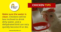 visit us @ www.poultryindia.co.in