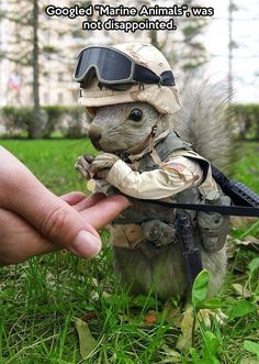 Marine squirrel // funny pictures - funny photos - funny images - funny pics - funny quotes - #lol #humor #funnypictures