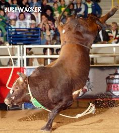 55 Best Pbr World Ch Bushwacker Images Professional