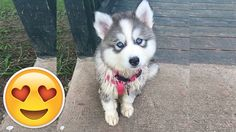 Puppy Surprises! :) Dog Water Bottle, Funny Comics, Husky, Cute Animals, Puppies, Yandex, Youtube, Life, Cute Funny Animals