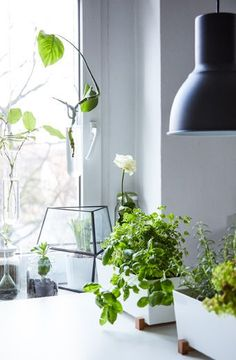 Grow herbs in planters on the work surface for easy access while you're cooking | #IKEAIDEAS #kitchengarden