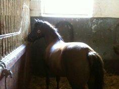 Horse in the morning sun