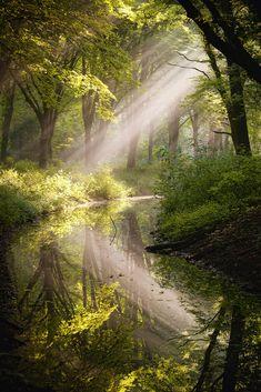 Morning splendor -