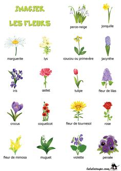 Identifying flowers by their blooms French Teaching Resources, Teaching French, Learn French Fast, French Education, French Classroom, Plant Cuttings, French Words, Montessori Activities, French Tips