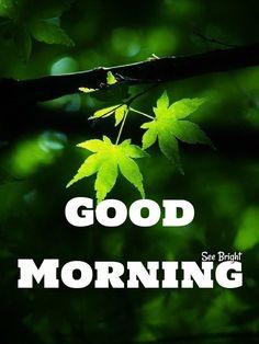 Sunday Morning Quotes, Good Morning Greetings, Morning Wish, Happy 420 Day, Good Morning Animation, Good Morning Beautiful Quotes, Medical Marijuana, Cannabis, Morning Pictures