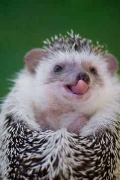 Hedgehog. How cute!!!!