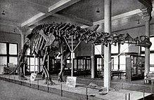 Pin By Juan María On Dinosaurios Brontosaurus Prehistoric Animals Dinosaur