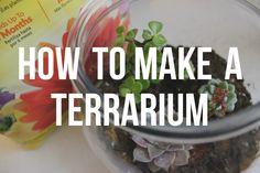 How to Make a Terrarium - ErinTheInsomniac