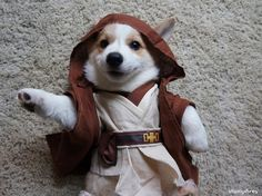 Funny pictures about Corgi-Wan Kenobi. Oh, and cool pics about Corgi-Wan Kenobi. Also, Corgi-Wan Kenobi. Cute Funny Animals, Funny Animal Pictures, Funny Cute, Funny Dogs, Funny Dog Pictures, I Love Dogs, Puppy Love, Cute Puppies, Cute Dogs