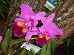 Orquídeas na Primavera - 4 a 7 de setembro de 2015 - Jardim Botânico do RJ