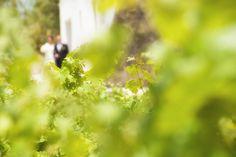 Boda entre viñedos Fruit, Wedding