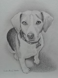 Graphite drawing of dog