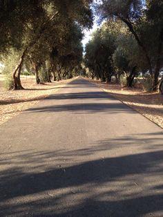 Daybreak on Olive Tree Lane in Davis, Calif.